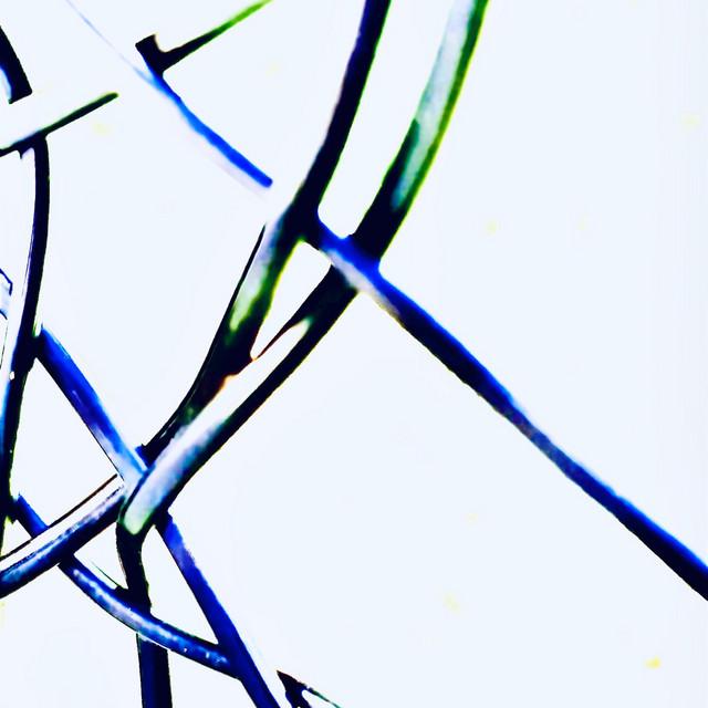 Web Blue Death