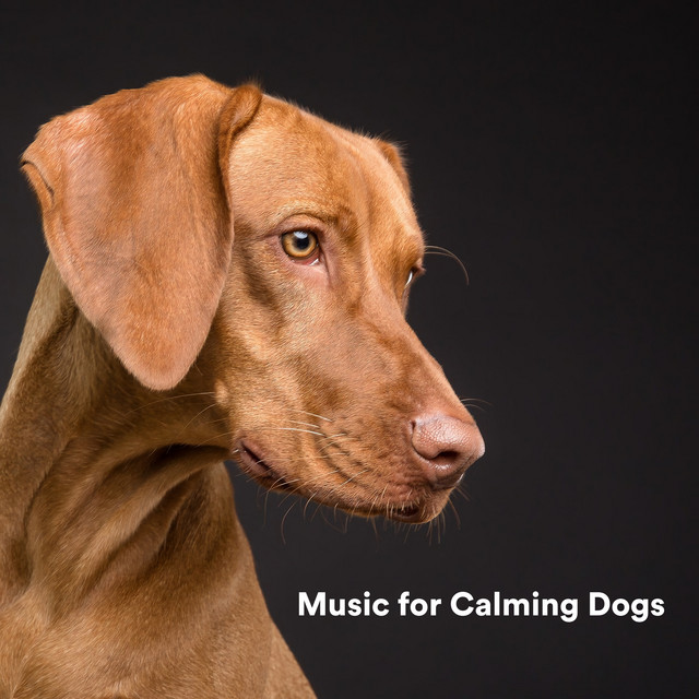 Album cover for Music for Calming Dogs by Sleepy Dogs, Music for Calming Dogs, Music for Leaving Dogs Home Alone