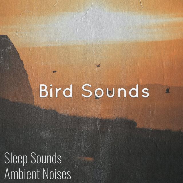 Tranquil Birdsong & Birds Singing