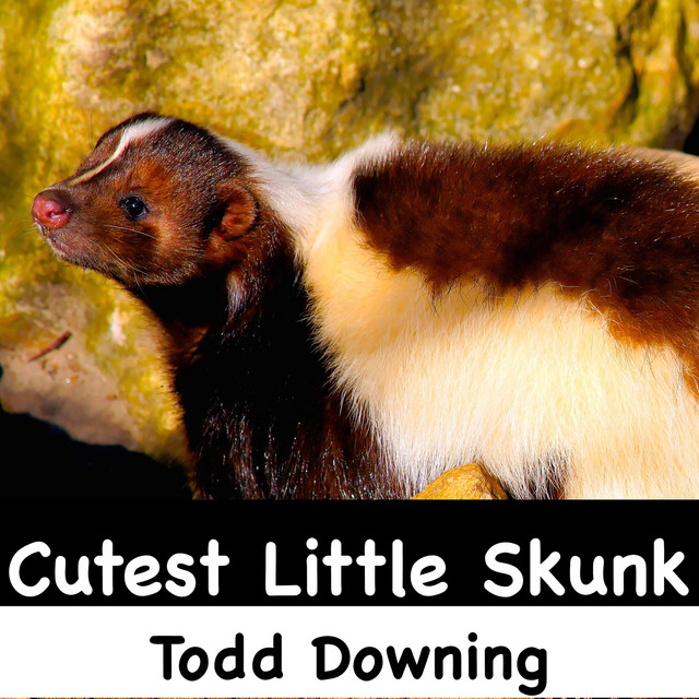 Cutest Little Skunk by Todd Downing