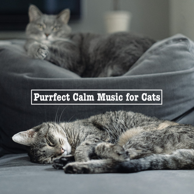 Album cover for Purrfect Calm Music for Cats by Cat Music, Music For Cats, Cats Music Zone