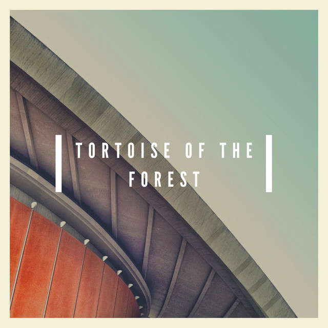Tortoise Of The Forest