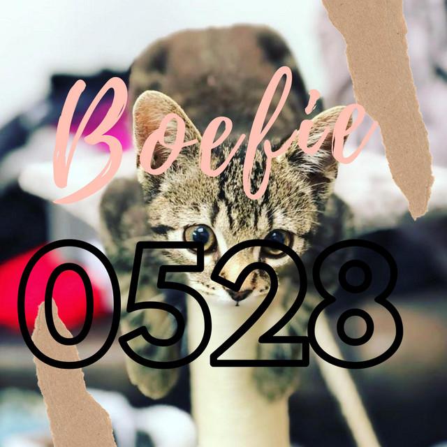 Boefie0528