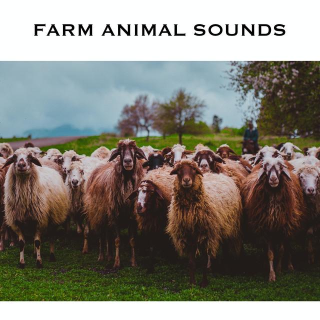 Farm Animal Sounds & Animal Noises
