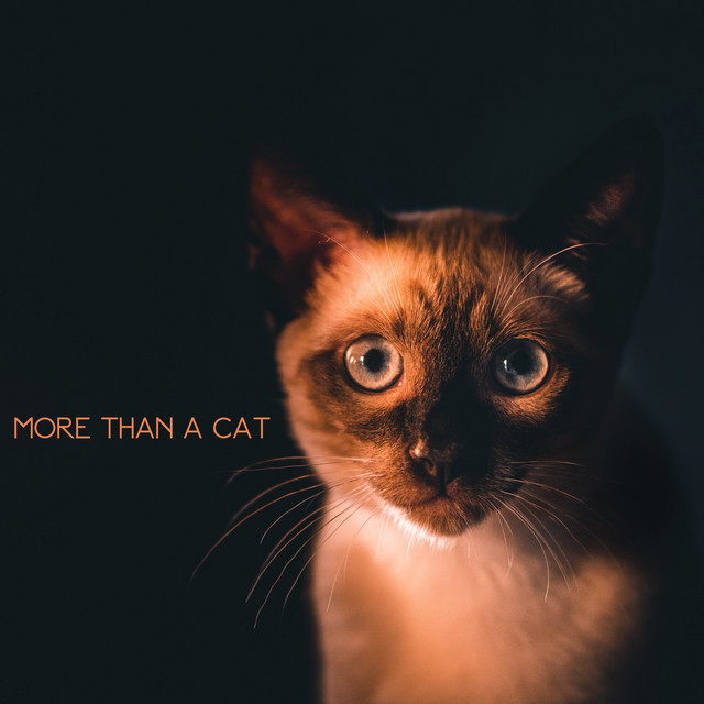More Than a Cat
