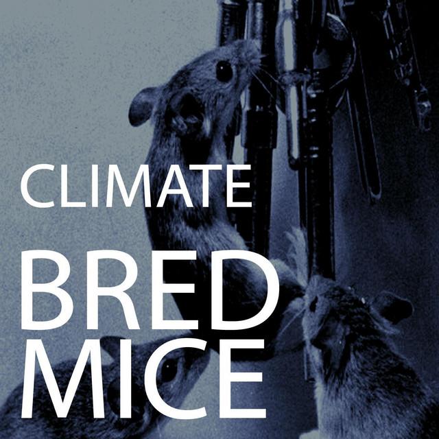 Bred Mice