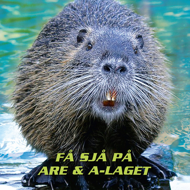 Are & A-Laget