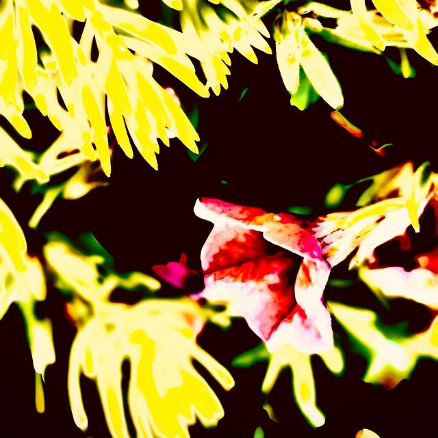 Wonderful Beauty Yellow Redly