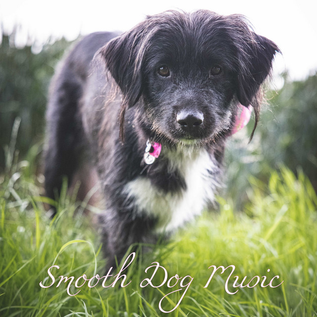 Smooth Dog Music