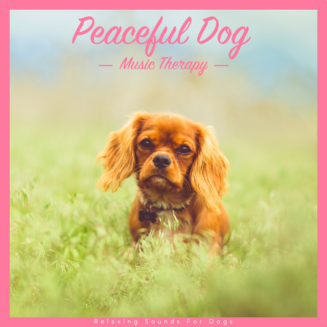 Peaceful Dog Music Therapy: Relaxing Sounds for Dogs
