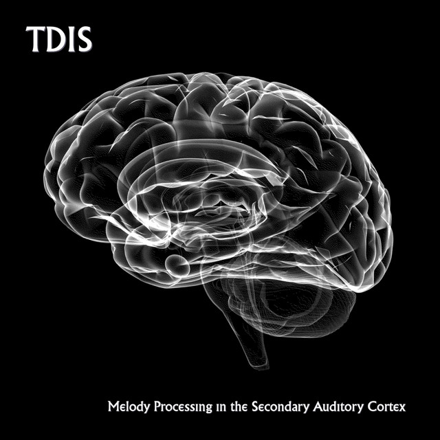 Melody Processing in the Secondary Auditory Cortex