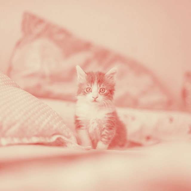 Astonishing Piano and Bell Music - Bgm for Kittens