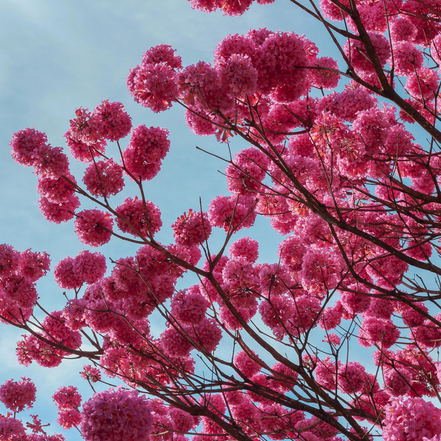 Spring Soul