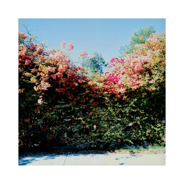 sunflwr - bonita beats Image