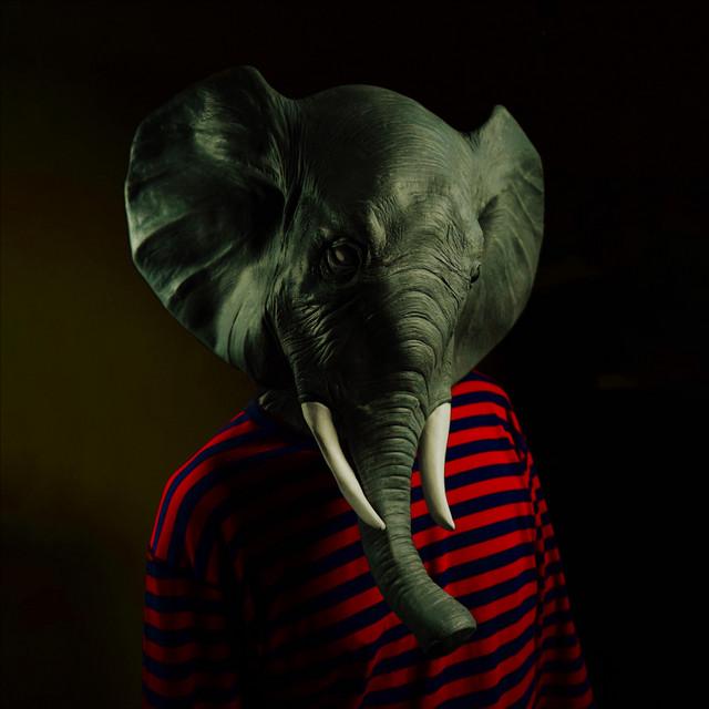 First Elephant