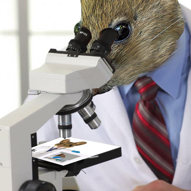 Lab Rat 3