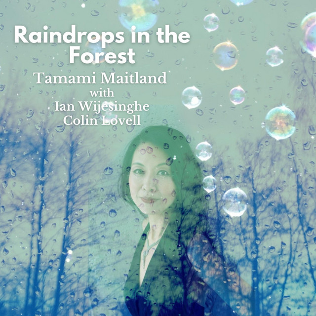 Raindrops in the Forest