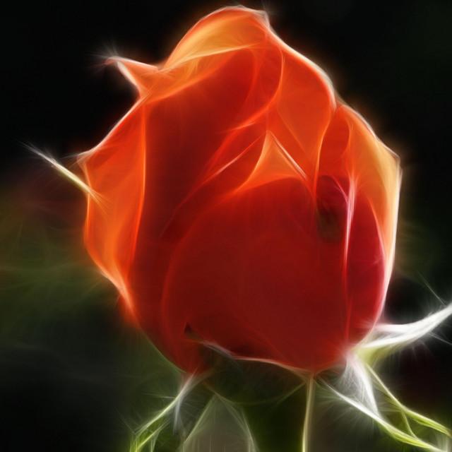 Crimsonia