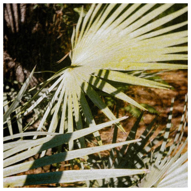 Nylon Under the Palm
