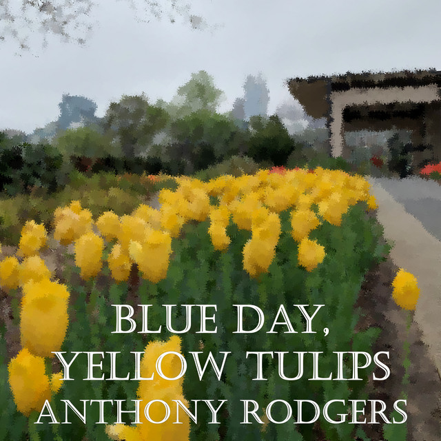 Blue Day, Yellow Tulips