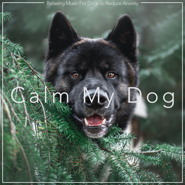 Calm My Dog: Relaxing Music For Dogs to Reduce Anxiety