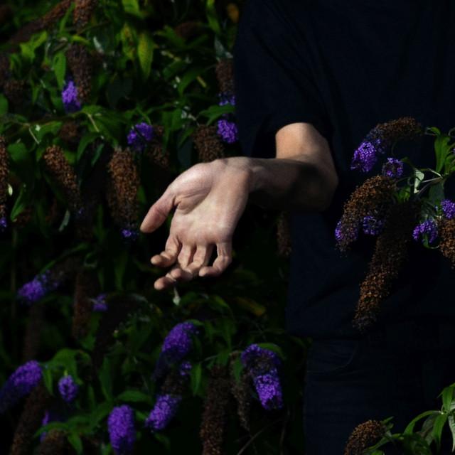 In Velvet Image