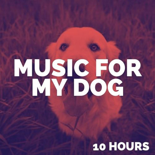 Music for My Dog (10 Hours) Music for Dogs, Dog Music, Relaxing Dog Music, Calming Dog Music