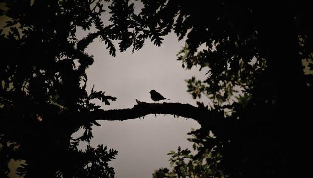 SMK - Vogels van de Nacht