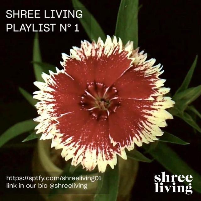 Shree Living • No 1