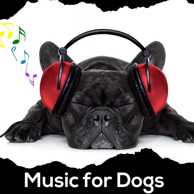 Music for Dogs 🐶 Relaxing Dog Music
