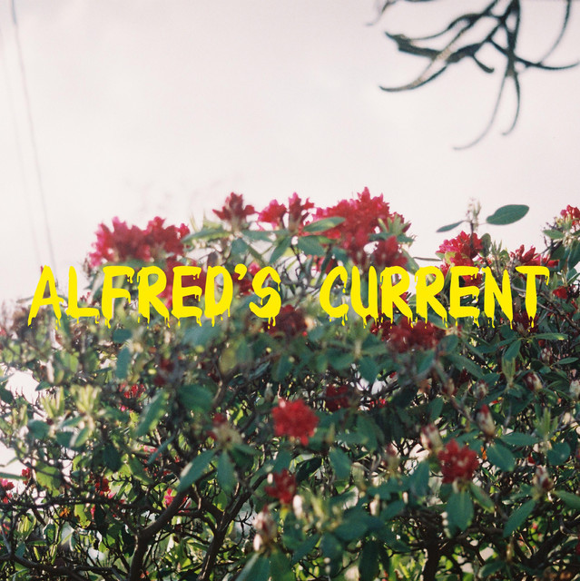 Alfred's current