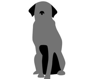 Street Dog