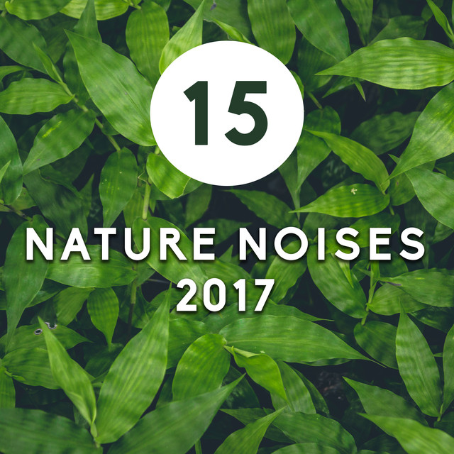 Stress Free Song, a song by Nature Sounds Artists on Spotify