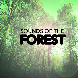 Sounds of the Forest Albumcover