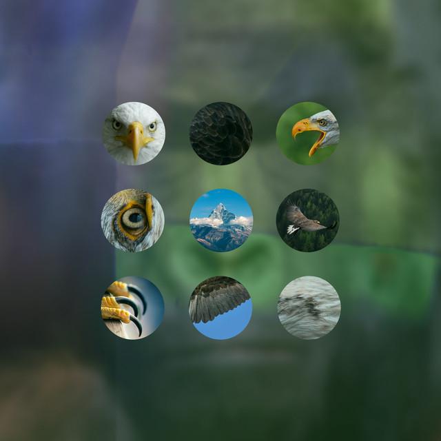 Rovfågel bland fredsduvor