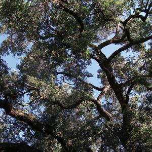Trees album