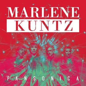 Pansonica album