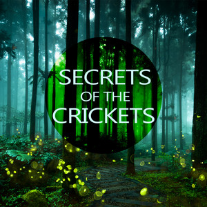 Secrets of the Crickets Albumcover