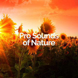 Pro Sounds of Nature profile picture