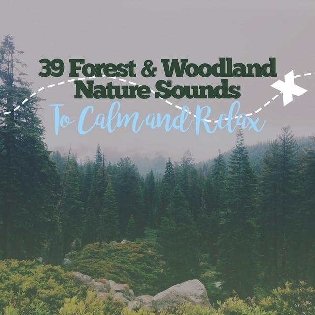 39 Forest & Woodland Nature Sounds To Calm and Relax by Forest