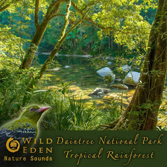 Daintree National Park - Tropical Rainforest (Sounds of