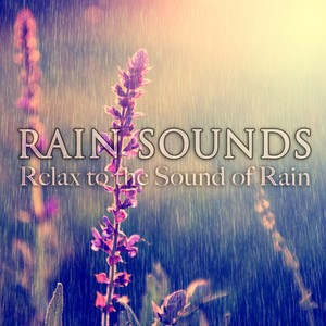Rain Sounds (Relax to the Sound of Rain) Albumcover