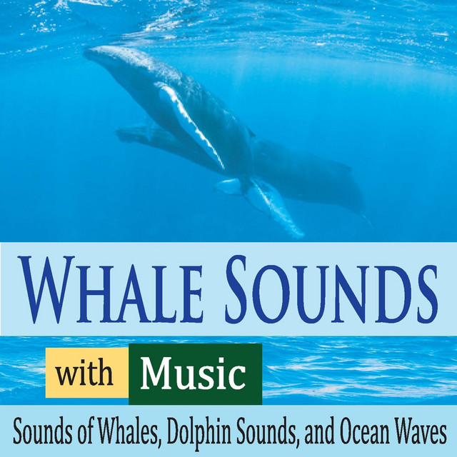 Beluga Whales (With Soft Piano), A Song By Robbins Island