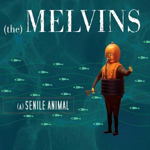 (A) Senile Animal album