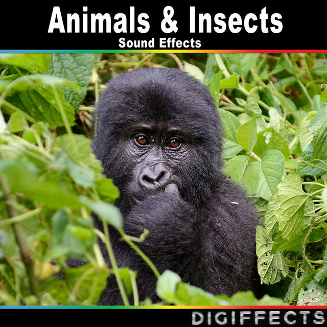 Siamang Monkey, a song by Digiffects Sound Effects Library