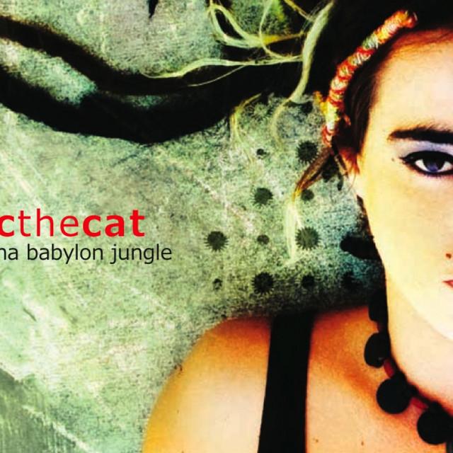 CC the Cat