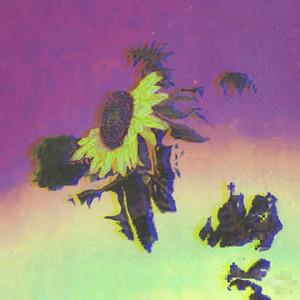 dry flower Albümü