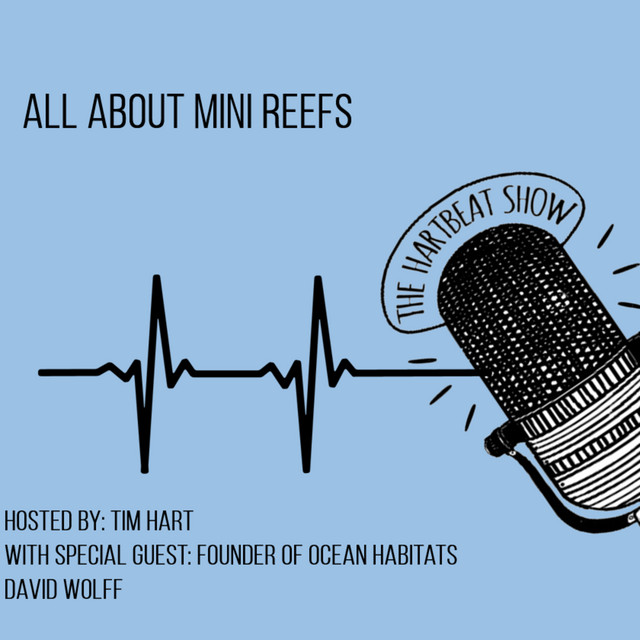 Ep #60 All About Mini Reefs with Ocean Habitat's Founder David Wolff