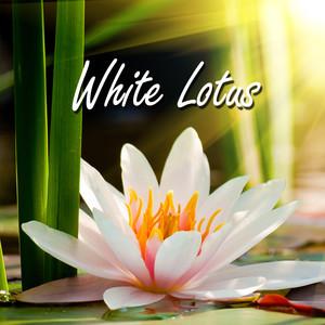 White Lotus Albumcover