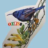 oofoe Artist | Chillhop
